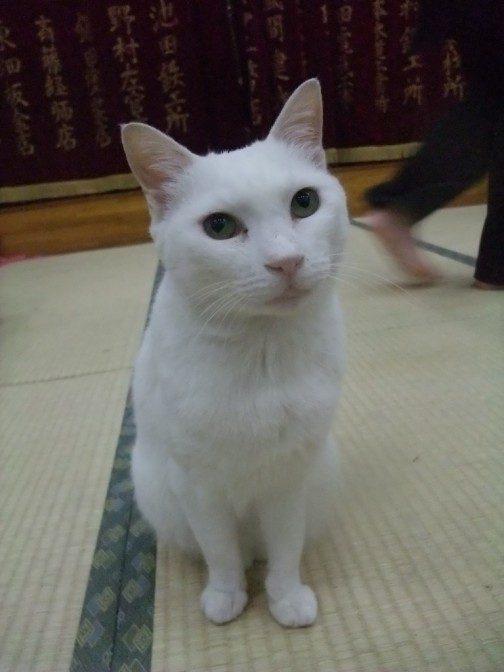 うろつく猫1