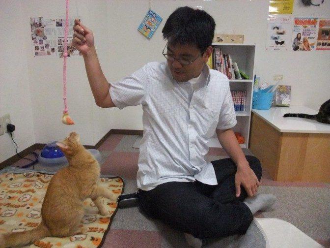 猫じゃらしに反応する猫カフェの猫、初めて見た