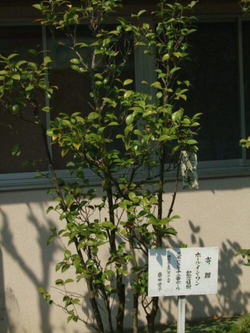 寄贈 ホールインワン記念植樹
