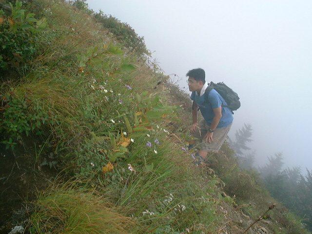 高山植物を愛でてみる
