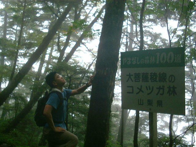 丸川峠に向けて下山