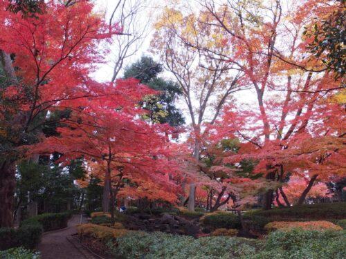 太田黒公園の紅葉