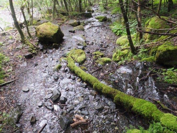 登山道なんだか川なんだか