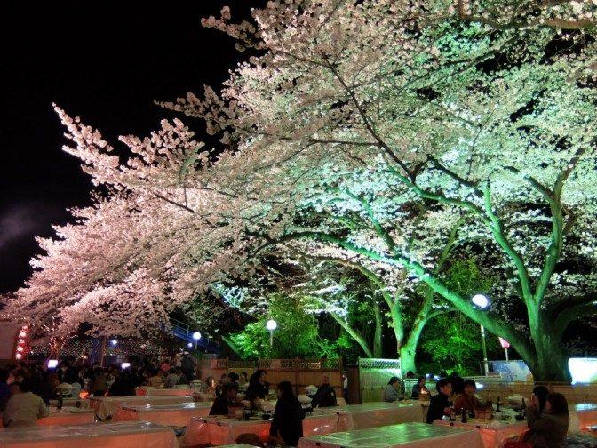見事な夜桜