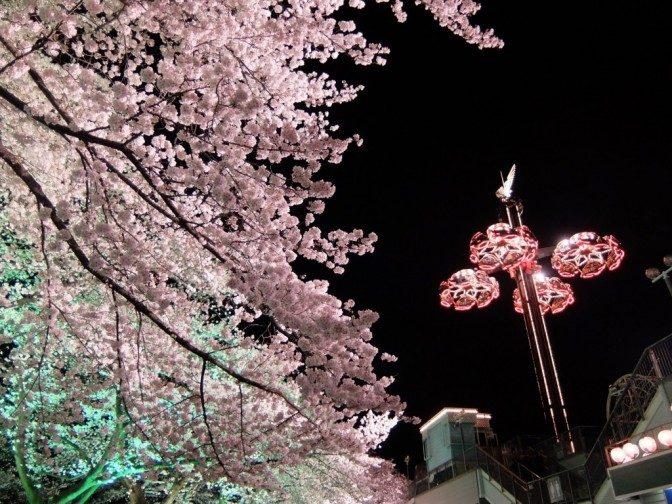 桜とセットで