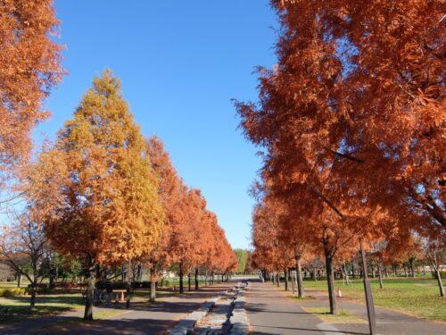 紅葉がきれいな舎人公園