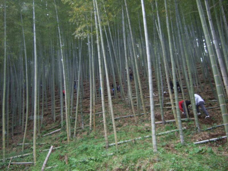 びっしり竹が生えている