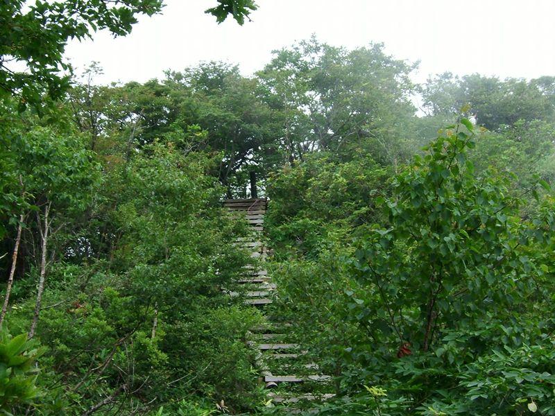 階段がある