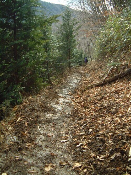 ぬかるむ登山道