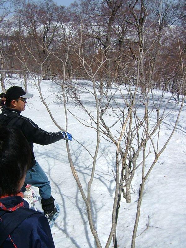 鹿にかじられた木の枝