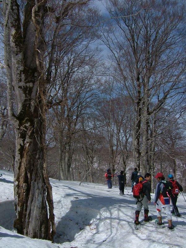 木の周辺だけ雪が溶けている