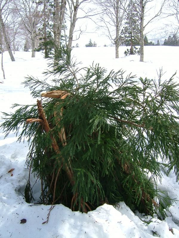 雪に折れた木の枝