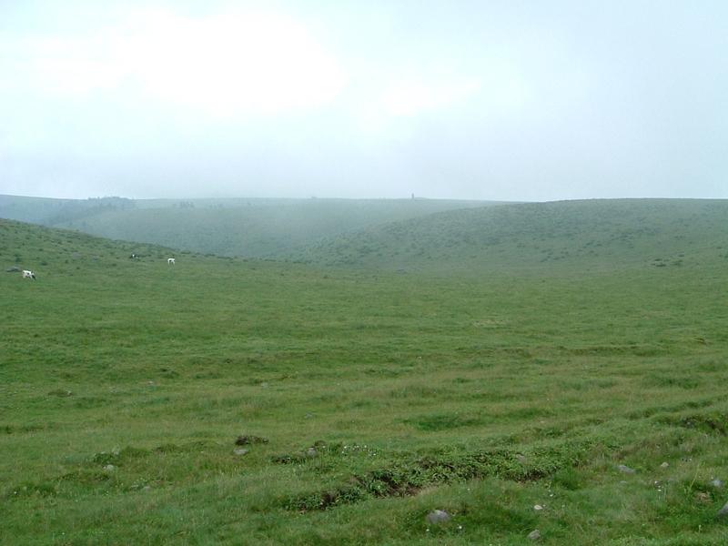 ひたすら草原