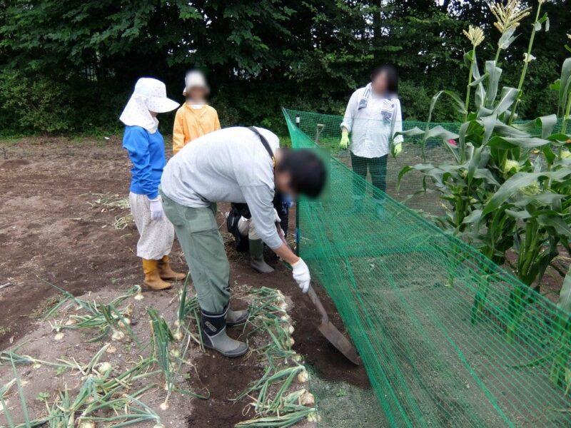 土をかぶせて隙間を埋める