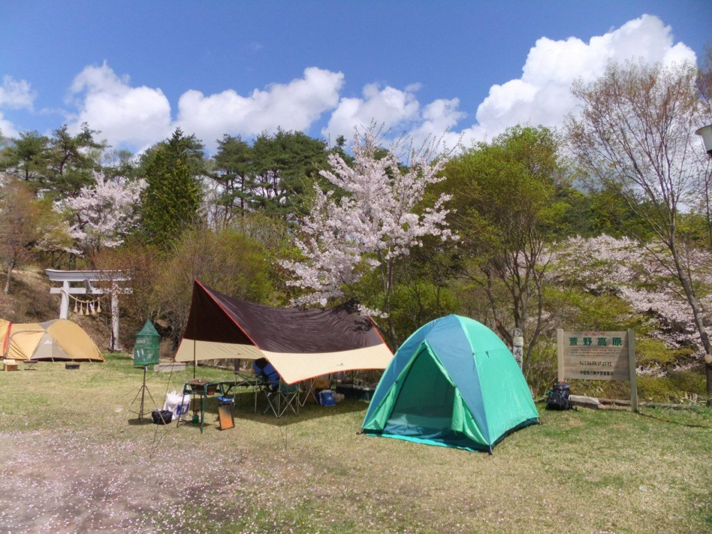 桜とテント
