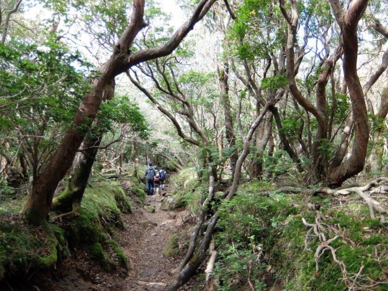 樹木トンネル