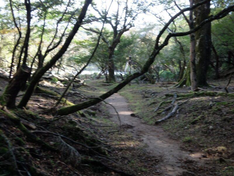 八丁池への道
