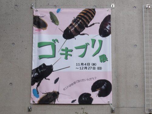 ゴキブリ展