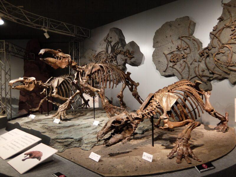 太古の哺乳類展 日本の化石でたどる進化と絶滅