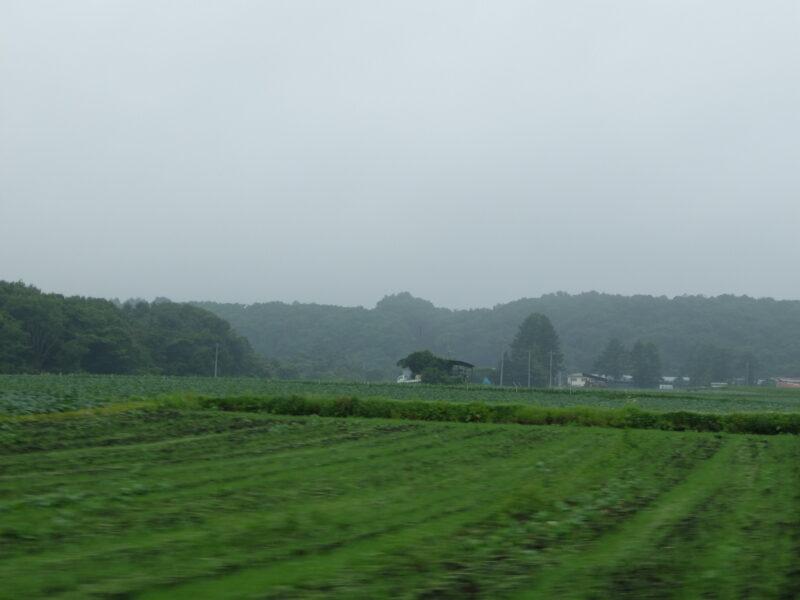 一面のキャベツ畑