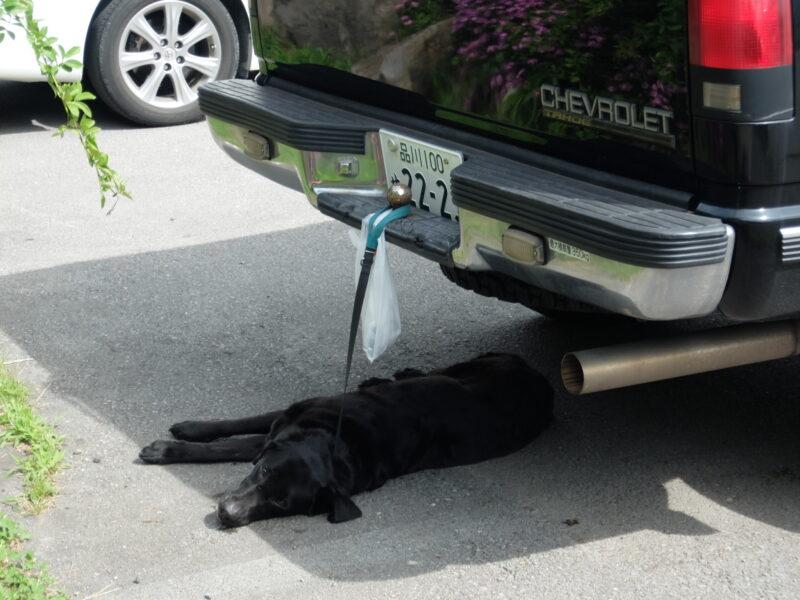 ぐったりする黒犬