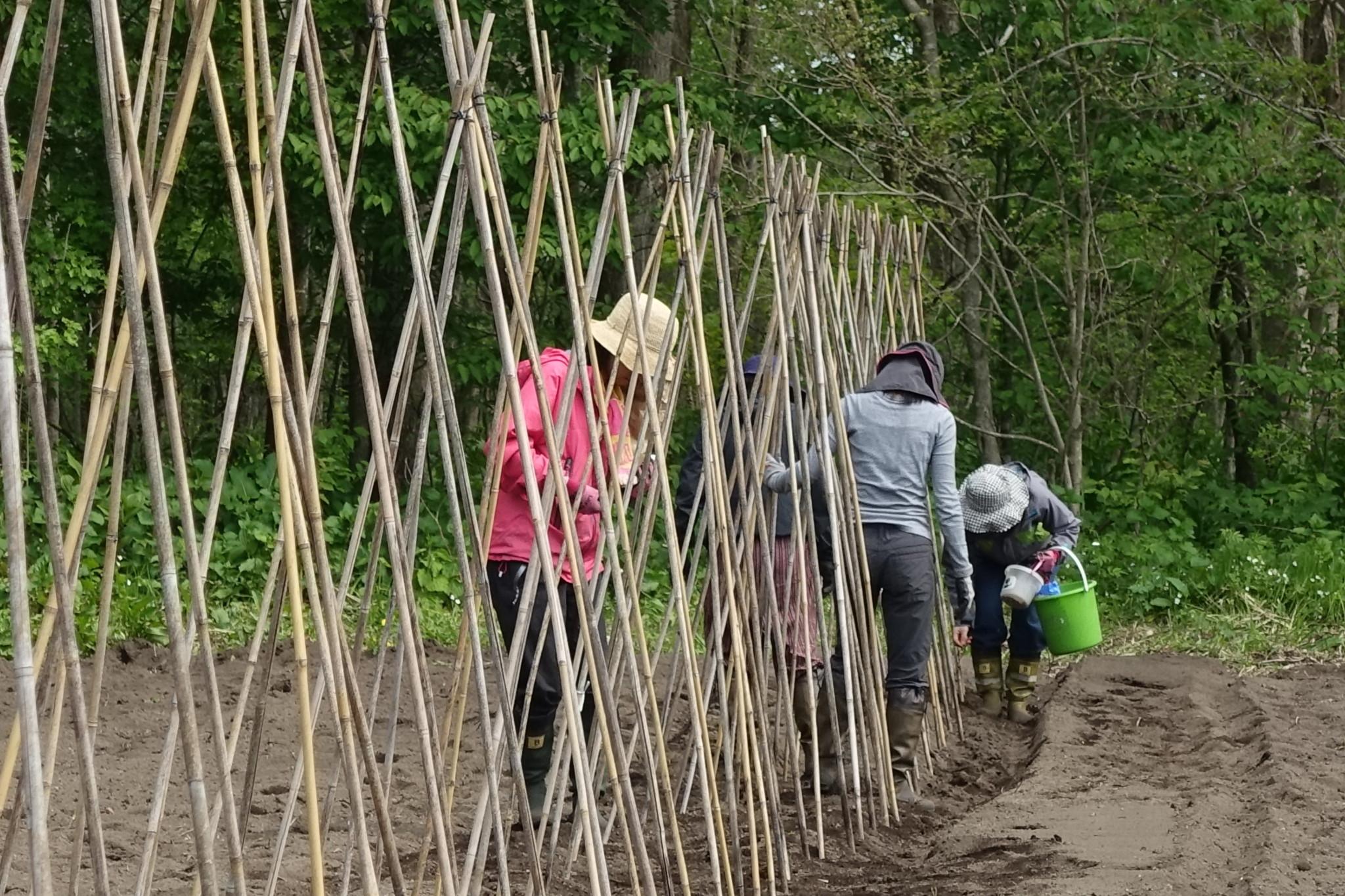手竹を埋める