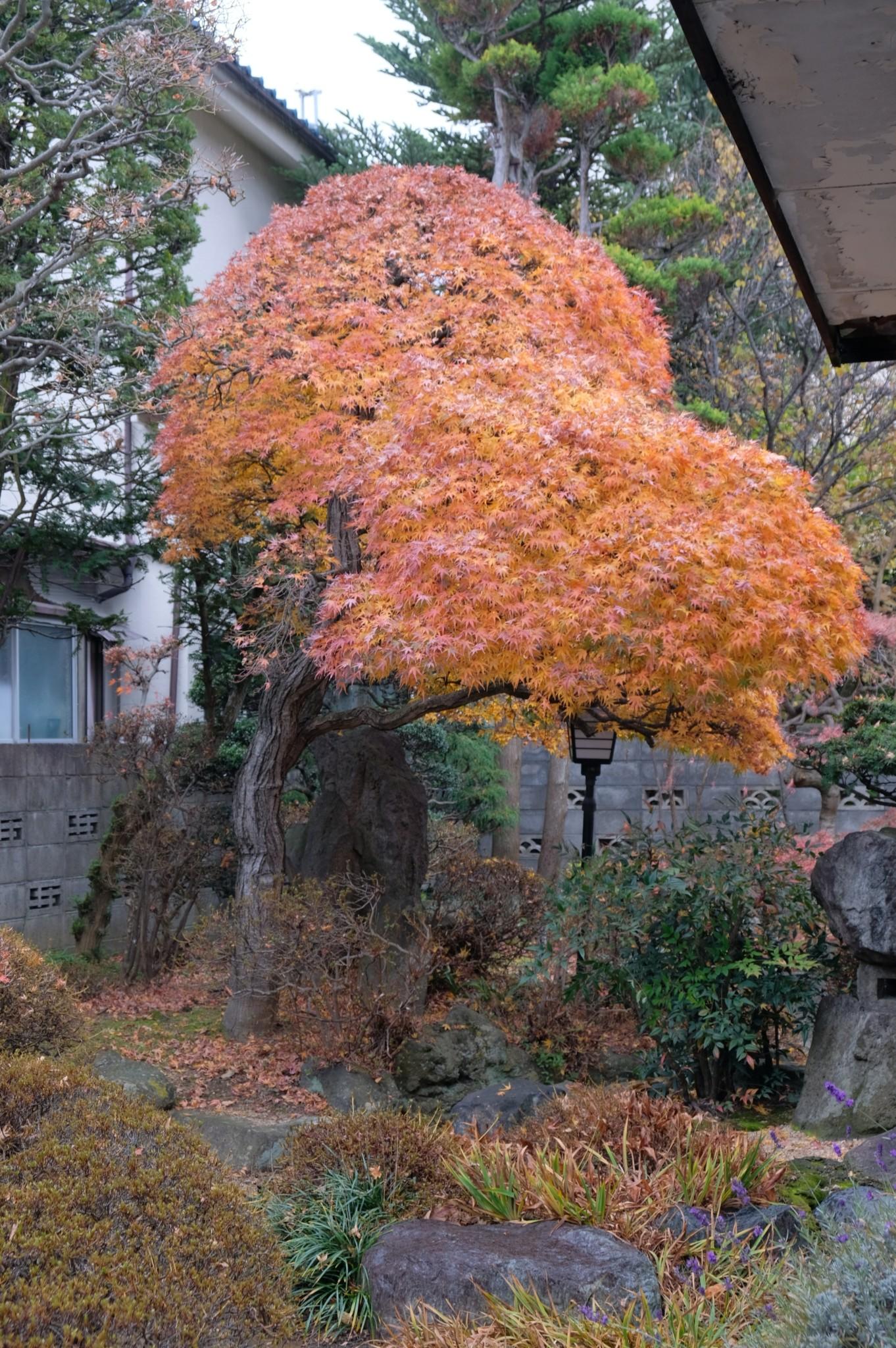 浅田の庭先