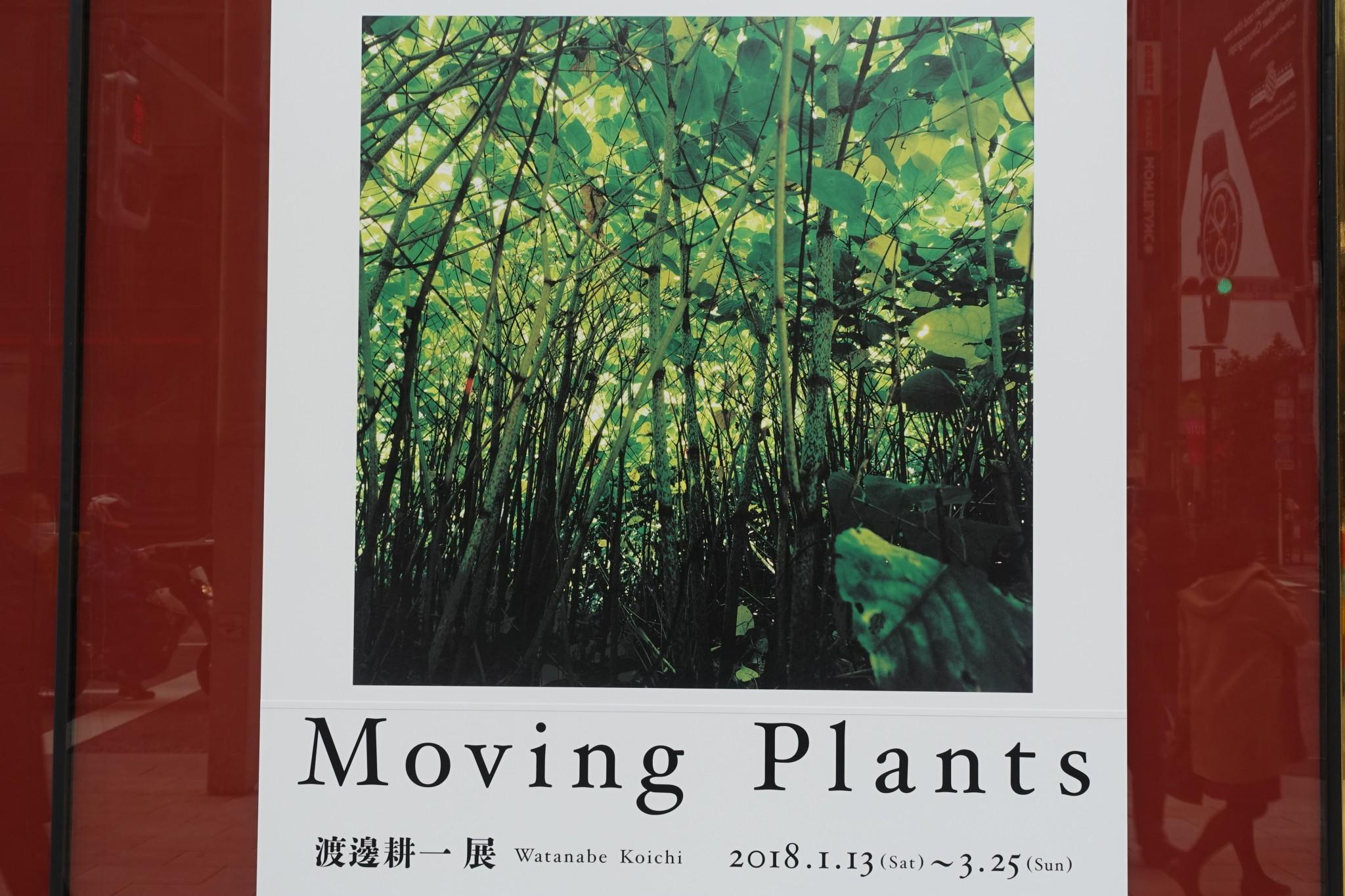 Moving Plants 渡邊 耕一展