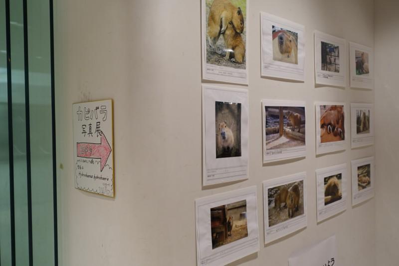 ご当地コスプレ写真展&カピバラ写真展@東京シティアイパフォーマンスゾーン