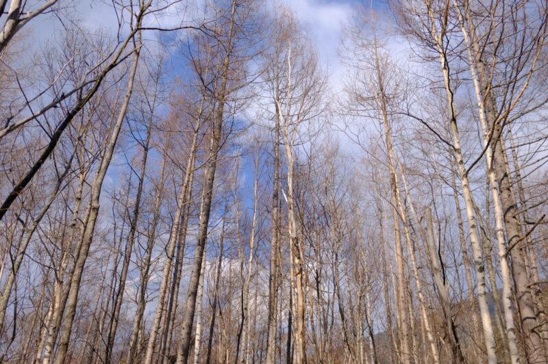 標高1,500メートルの木々と空